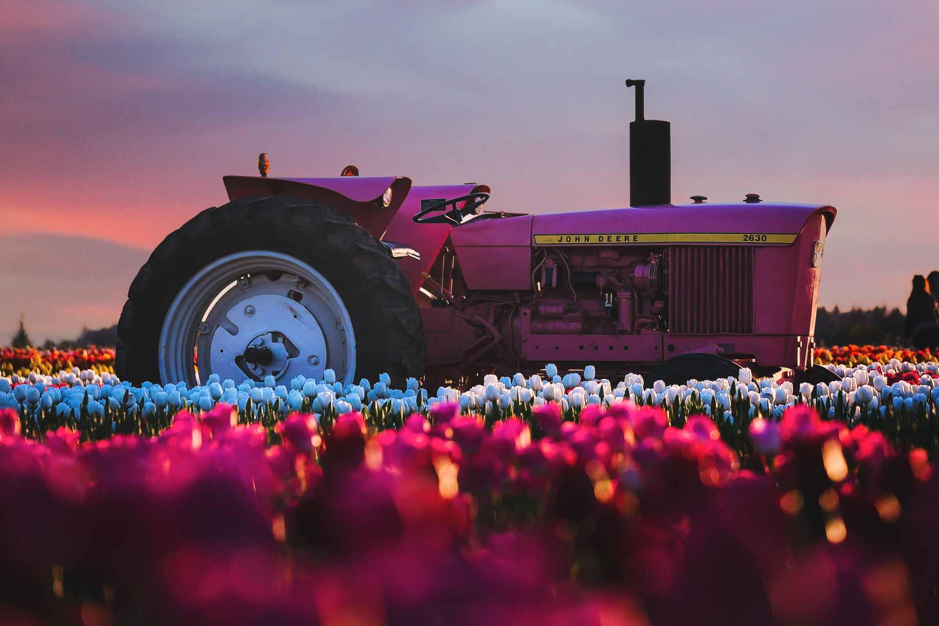 Tulpen fotograferen